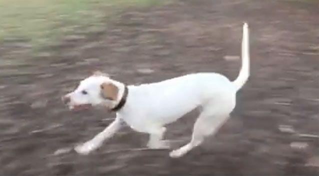 The owner's friend shared a video of a dog running in a park which she claims is the same dog from the video the RSPCA shared. Source: Facebook