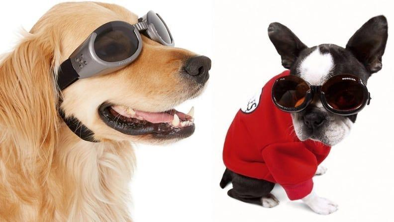 Keep your dog's eyes protected.