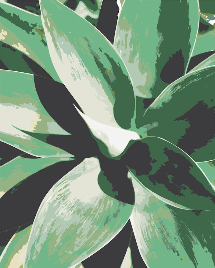 Agave Plant Paint by Numbers Kit