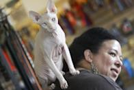 In this March 15, 2012 photo, a four-year-old hairless cream point Sphynx, Moshe Moshi, rests on the back of her owner Carol Meir of Takoma Park, Md., at The Big Bad Woof, a pet supplies store, in Washington. Meir is managing her cat's allergies with a venison and pork diet and daily medication. She figures it cost her about $750 for vets and tests. Medicine is $250 a year. (AP Photo/Charles Dharapak)
