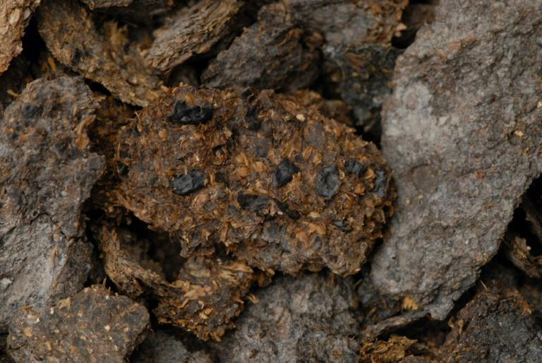 This undated image courtesy of the Museum of Natural History of Vienna shows a roughly 2,700-year-old human excrement from the Hallstatt salt mines in which beans, millet and barley are clearly visible (AFP/Anwora)