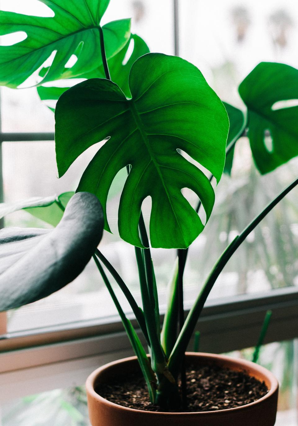 Most Instagrammed house plants