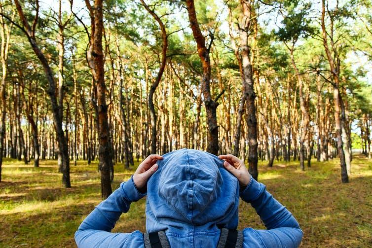 Tourist looking at pine forest.