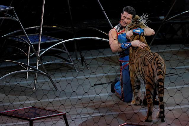 <p>Big cat trainer Alexander Lacey performs during the last show of the Ringling Bros. and Barnum & Bailey circus at Nassau Coliseum in Uniondale, New York, May 21, 2017. (Lucas Jackson /Reuters) </p>