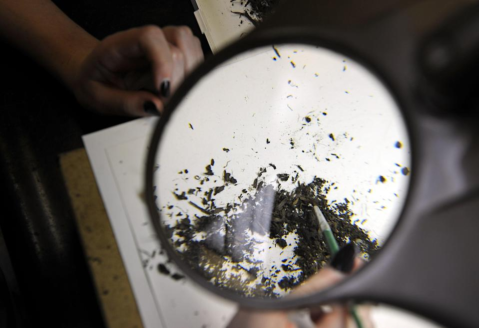 Paleontologist works on cleaning microfossil sorting in the Fishbowl lab of the Page Museum in Los Angeles (AFP via Getty Images)