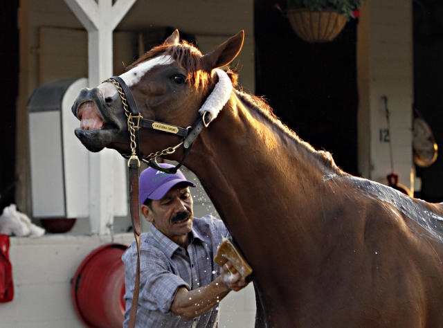 Kentucky Derby winner California Chrome reacts as groomer Raul Rodriguez gives him a bath after a jog on the track at Churchill Downs in Louisville, Ky., Wednesday, May 7, 2014. (AP Photo/Garry Jones)