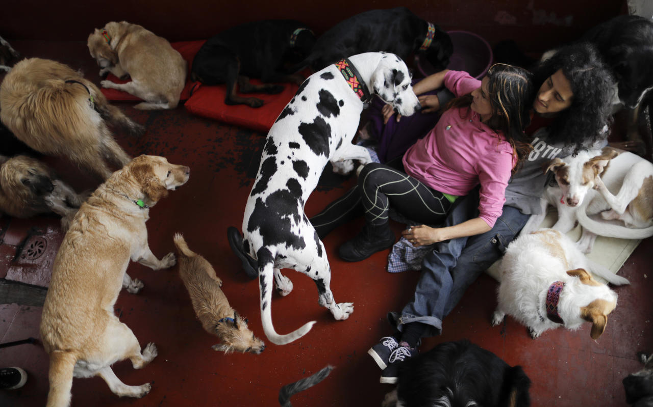 <p>Jair and Mariam Luzan interact with their pets as they pose for a picture in their temporary home in the aftermath of a 7.1-magnitude earthquake that made them abandon their animal rescue home with their 50 dogs and pet pig, in Mexico City, Friday, Sept. 22, 2017. (Photo: Natacha Pisarenko/AP) </p>