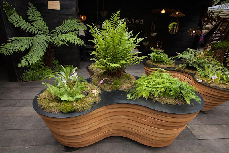 Sheila Jack's planting was inspired by the sub-tropical wilderness of Helston in Cornwall, where ferns, orchids and moss colonize every surface.