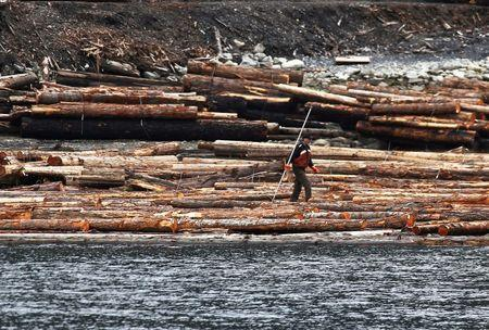 FILE PHOTO: A log driver works a barge of Canadian logs at Squamish Mills Ltd in Howe Sound near Squamish