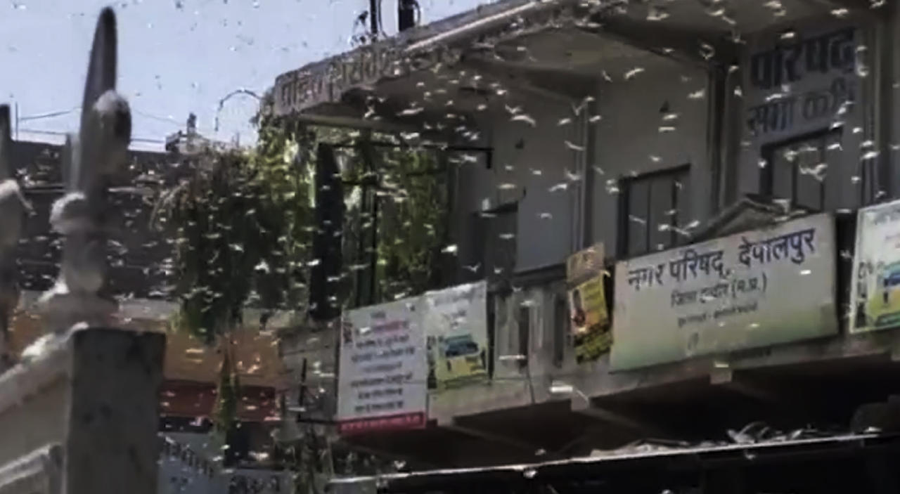 This grab made from Wednesday, May 27, 2020 video provided by KK Productions, shows locusts swarming over city and near by area in Indore, Madhya Pradesh, India. India is grappling with scorching temperatures and the worst locust invasion in decades as authorities prepared for the end of a months long lockdown despite recording thousands of new infections every day. (KK Production via AP)