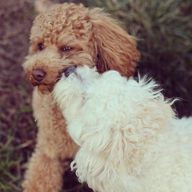 10 Dog Breeds That Don T Stink So You Don T Feel Guilty