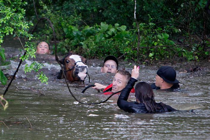 <p>APR. 18, 2016 — Justin Nelzen, in red vest, joins others as they work to rescue up to 70 horses along Cypresswood Drive near Humble along Cypress Creek in Houston, TX. More than a foot of rain fell in parts of Houston, submerging scores of subdivisions and several major interstate highways, forcing the closure of schools and knocking out power to thousands of residents who were urged to shelter in place. (Mark Mulligan/Houston Chronicle via AP) </p>