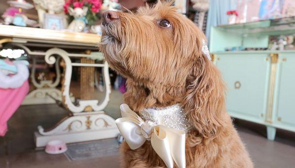 PHOTO: A stylized collar for a dog to wear in a wedding designed by Fifi & Romeo. (Olivia Smith/ABC News)