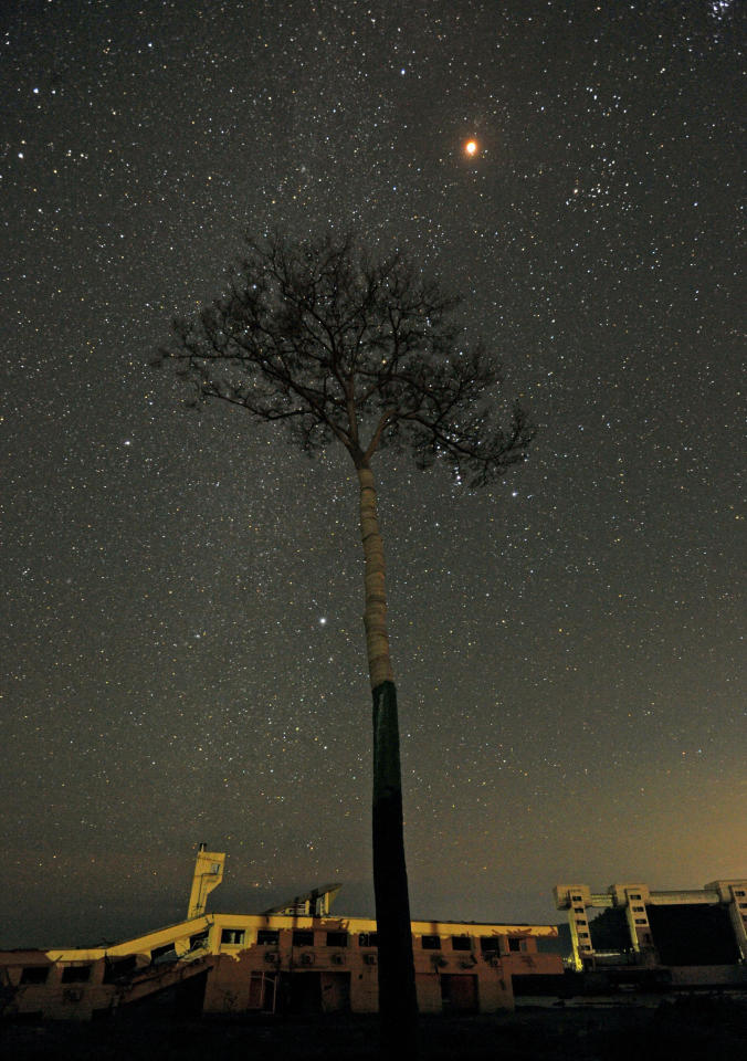 A total lunar eclipse is seen above a tree known as miracle solitary pine tree in Japan, which survived after the March 11 tsunami hit the area, in Rikuzentakata, Iwate prefecture, in this photo taken by Kyodo on December 10, 2011. REUTERS/Kyodo