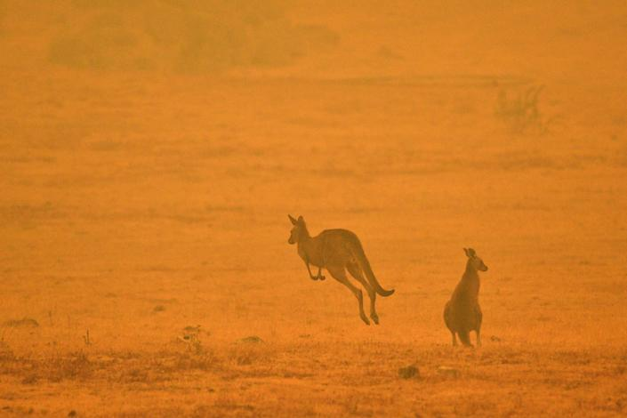 As tens of thousands of residents fled their homes amid catastrophic conditions in early January, a kangaroo jumps in a field shrouded with smoke from a bushfire in Snowy Valley. (Photo: SAEED KHAN via Getty Images)