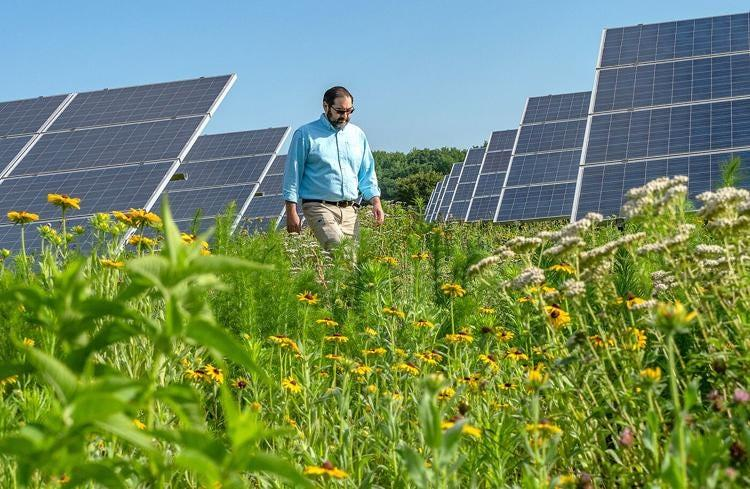 Steve Levitsky, Perdue Farms Inc.'s vice president for sustainability, walks through the pollinator garden that surrounds the company's solar array at its Salisbury headquarters. Some solar developers are planting these habitats with projects to address complaints about farmland being lost.