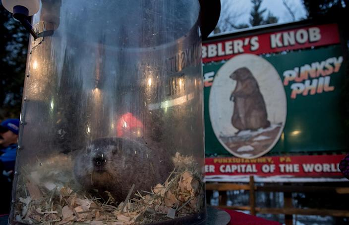 <p>Punxsutawney Phil saw his shadow, predicting six more weeks of winter, during the 131st annual Groundhog Day festivities on Feb. 2, 2017, in Punxsutawney, Pa. (Jeff Swensen/Getty Images) </p>