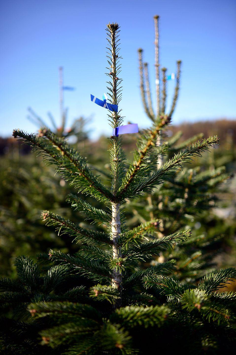 """<p>Instead of hitting the corner stand or the local nursery, consider a day trip to a tree farm, where you can cut down your own tree. Of course, you could put an entirely different spin on the Christmas activity, too: If you don't want a live tree, craft a pegboard or washi tape tree on an empty wall. </p><p><em>Learn how to make a pegboard Christmas tree at <a href=""""https://sugarandcloth.com/diy-pegboard-christmas-tree/"""" rel=""""nofollow noopener"""" target=""""_blank"""" data-ylk=""""slk:Sugar & Cloth"""" class=""""link rapid-noclick-resp"""">Sugar & Cloth</a>.</em><br></p>"""