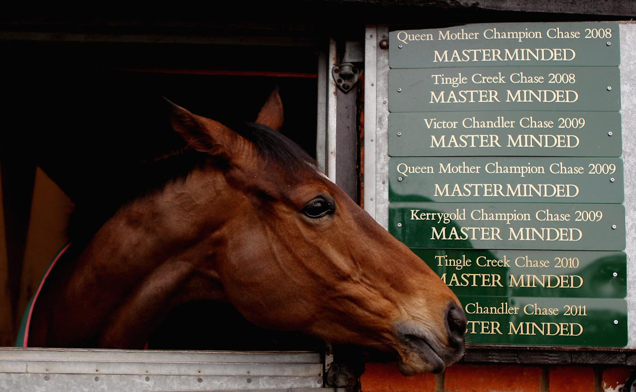 SHEPTON MALLET, ENGLAND - FEBRUARY 21:  Masterminded in the stables on February 21, 2011 in Shepton Mallet, England.  (Photo by Scott Heavey/Getty Images)
