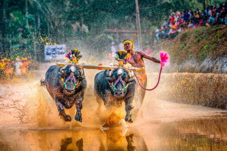 Srinivas Gowda has won fame after clocking blistering times running behind two buffaloes at an annual race called Kambala