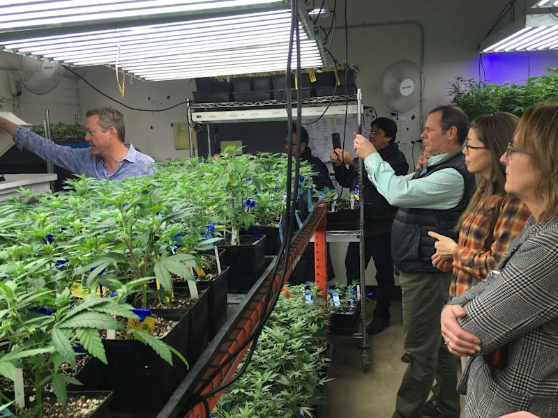 In this Jan. 31, 2017 photo, Denver marijuana grower Tim Cullen, left, shows young marijuana clones to out-of-state agriculture officials on a grow warehouse tour organized by the Colorado Department of Agriculture in Denver. Colorado's Agriculture Department is opening up its marijuana knowledge to other states and encouraging them to plan now for the possibility of regulating farmers growing a plant that violates federal law. (AP Photo/Kristen Wyatt)
