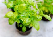 "<p>Basil is loaded with polyphenols, which are beneficial in soothing chronic pain associated with <a href=""https://www.prevention.com/health/health-conditions/a19840908/rheumatoid-arthritis-symptoms/"" rel=""nofollow noopener"" target=""_blank"" data-ylk=""slk:arthritis"" class=""link rapid-noclick-resp"">arthritis</a>, and even help protect your liver, brain, and heart, according to Mirkin. </p><p><strong>Try it: </strong>Perk up your salad or pasta dish with a sprinkle of minced basil, or whip up some <a href=""https://www.prevention.com/food-nutrition/recipes/a22037883/turkey-panini-strawberry-pesto/"" rel=""nofollow noopener"" target=""_blank"" data-ylk=""slk:strawberry pesto"" class=""link rapid-noclick-resp"">strawberry pesto</a> to spread on a sandwich.</p>"