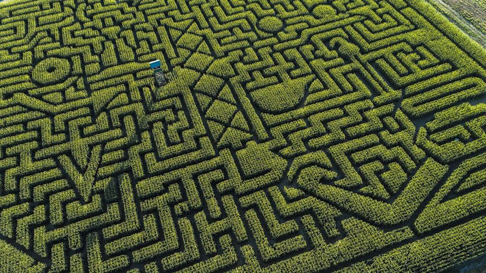 <p>Get lost together, get found together! A corn maze date is a good way to bring out your partner's sense of humor, explains Bagatelle-Black. You'll also get a sense of whether your partner is easy to work with.</p>