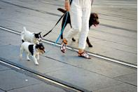 """<p>Even if you've done everything in your power to tire your dog out, he may still become restless after a few hours. This is where some time with a dog walker comes in handy. There are national services like <a href=""""https://www.rover.com/"""" rel=""""nofollow noopener"""" target=""""_blank"""" data-ylk=""""slk:Rover"""" class=""""link rapid-noclick-resp"""">Rover</a> and <a href=""""https://wagwalking.com/"""" rel=""""nofollow noopener"""" target=""""_blank"""" data-ylk=""""slk:Wag!"""" class=""""link rapid-noclick-resp"""">Wag!</a>, where you can read reviews of the dog walker and schedule a meet and greet. </p><p>If possible, Coates suggests you ask any potential dog walker to start a few days before you return to the office so, """"your dog doesn't react badly to a stranger coming into their home."""" </p><p>Additionally, make sure they are following the official <a href=""""https://www.cdc.gov/coronavirus/2019-ncov/index.html"""" rel=""""nofollow noopener"""" target=""""_blank"""" data-ylk=""""slk:COVID-19 guidelines"""" class=""""link rapid-noclick-resp"""">COVID-19 guidelines</a> from the Centers for Disease Control and Prevention. <br></p>"""