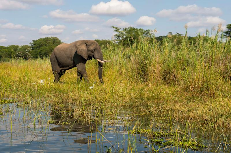 United Kingdom soldier on anti-poaching mission killed by elephant