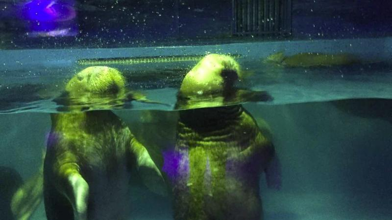 Visitors to the zoo have complained that the tanks housing the marine animals are 'filthy' and far too small. Photo: Animals Asia