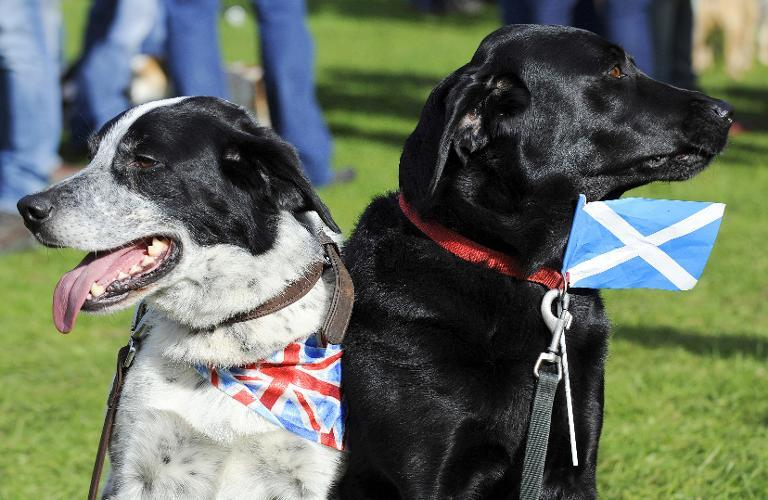 Dogs wearing a union flag (L) and a Scottish flag attend the 150th Birnam Highland Games in Perthshire, Scotland, on August 30, 2014 (AFP Photo/Andy Buchanan)