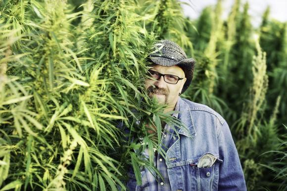 A man standing next to a crop of hemp plants.