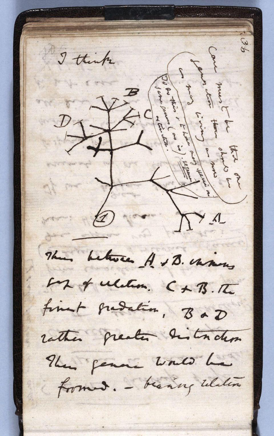 One of Charles Darwin's missing notebooks contained his Tree of Life sketch from July, 1837.  (University of Cambridge )