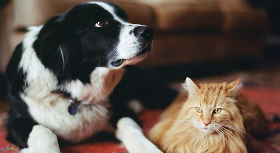Best cat and dog DNA kits to find out pets genetics