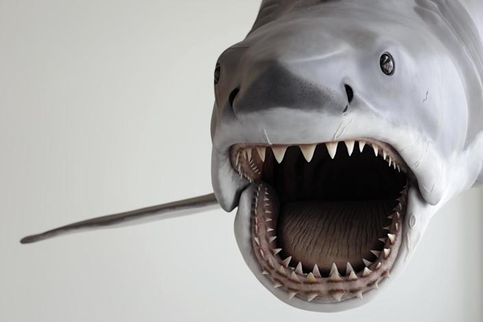 """A shark prop made for """"Jaws"""" hovers over the escalators at the Academy Museum of Motion Pictures."""