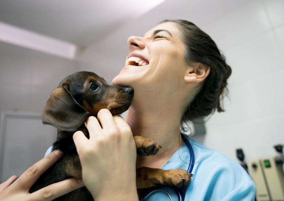 CVS Group provides veterinary services in the UK (CVS)