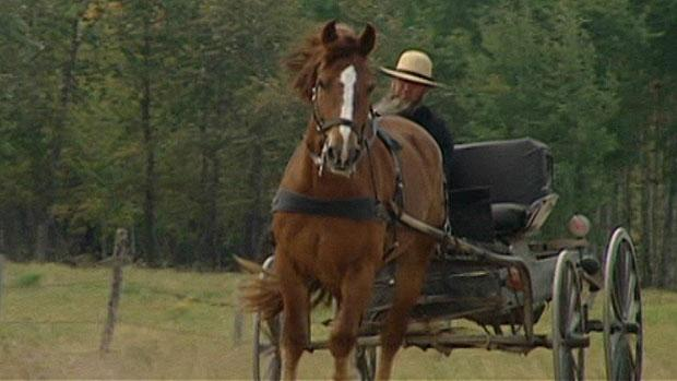 The men are part of an old order Mennonite community, which refers to Mennonites who practice a lifestyle without many elements of modern technology, such as using a horse and carriage for transportation.