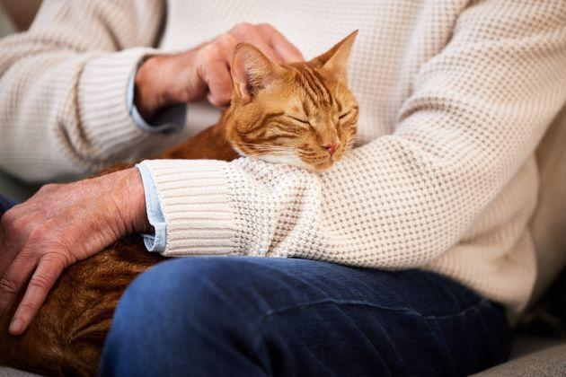 50% of Cats Like Humans Being Home During Lockdown