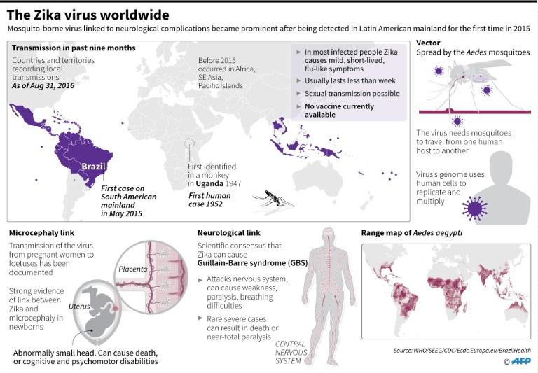 The Zika virus