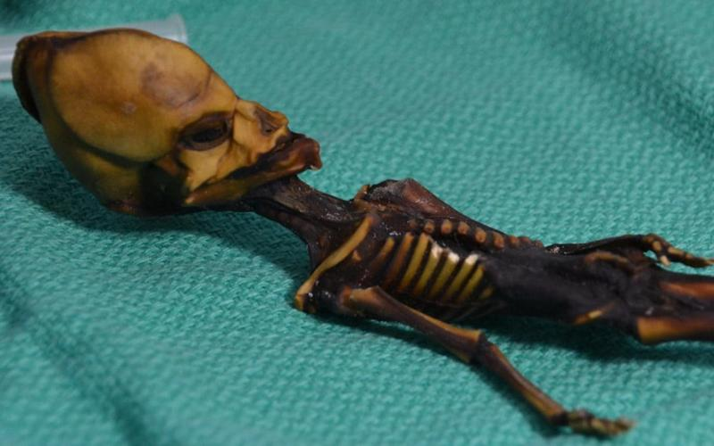 The skeleton only had 10 ribs and was just six inches long  - Bhattacharya S et al. 2018.
