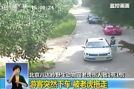 Video still shows a tiger approaching a woman before attacking her, after she exited a car in a Beijing wildlife park, China
