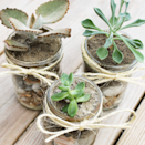 """<p>Whether or not he's a green thumb himself, he'll appreciate the work you put into crafting these adorable Mason jar succulents. And he doesn't have to be too careful about <a href=""""https://www.countryliving.com/gardening/garden-ideas/a26265781/cactus-garden/"""" rel=""""nofollow noopener"""" target=""""_blank"""" data-ylk=""""slk:taking care of them"""" class=""""link rapid-noclick-resp"""">taking care of them</a> either. </p><p><strong>Get the tutorial at <a href=""""https://thesummeryumbrella.com/diy-mason-jar-succulents/"""" rel=""""nofollow noopener"""" target=""""_blank"""" data-ylk=""""slk:The Summery Umbrella"""" class=""""link rapid-noclick-resp"""">The Summery Umbrella</a>.</strong></p>"""
