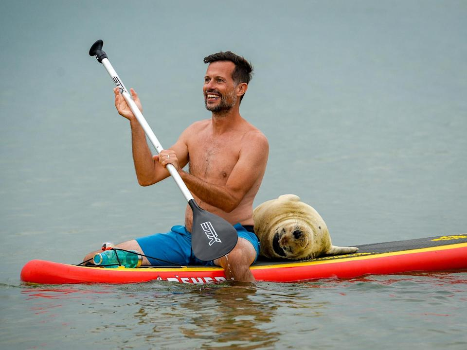 Sammy gets close to a paddleboarder: Getty