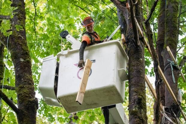 TMX pipeline contractors cut down a treehouse belonging to protestors on the TMX pipeline construction area in Burnaby, British Columbia on Tuesday, Sept. 28, 2021.  (Ben Nelms/CBC - image credit)