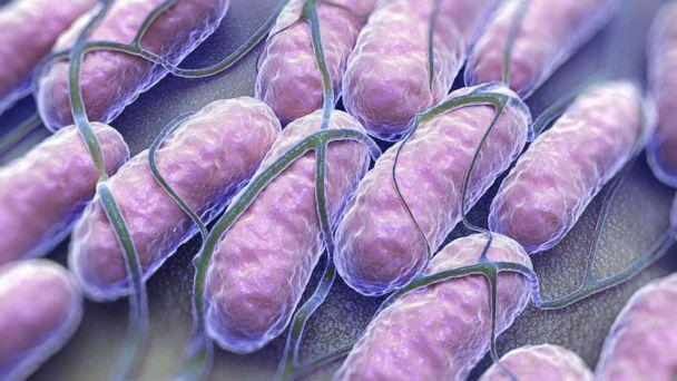 PHOTO: A culture of Salmonella bacteria is pictured in this undated stock photo. (STOCK/Getty Images)