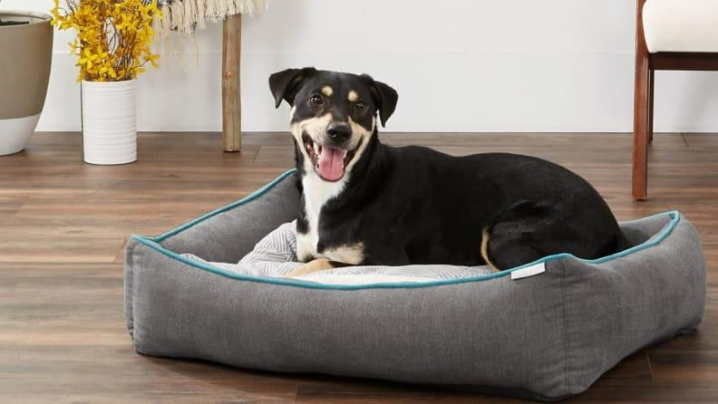 This comfy bed is great for dogs and cats of all ages.