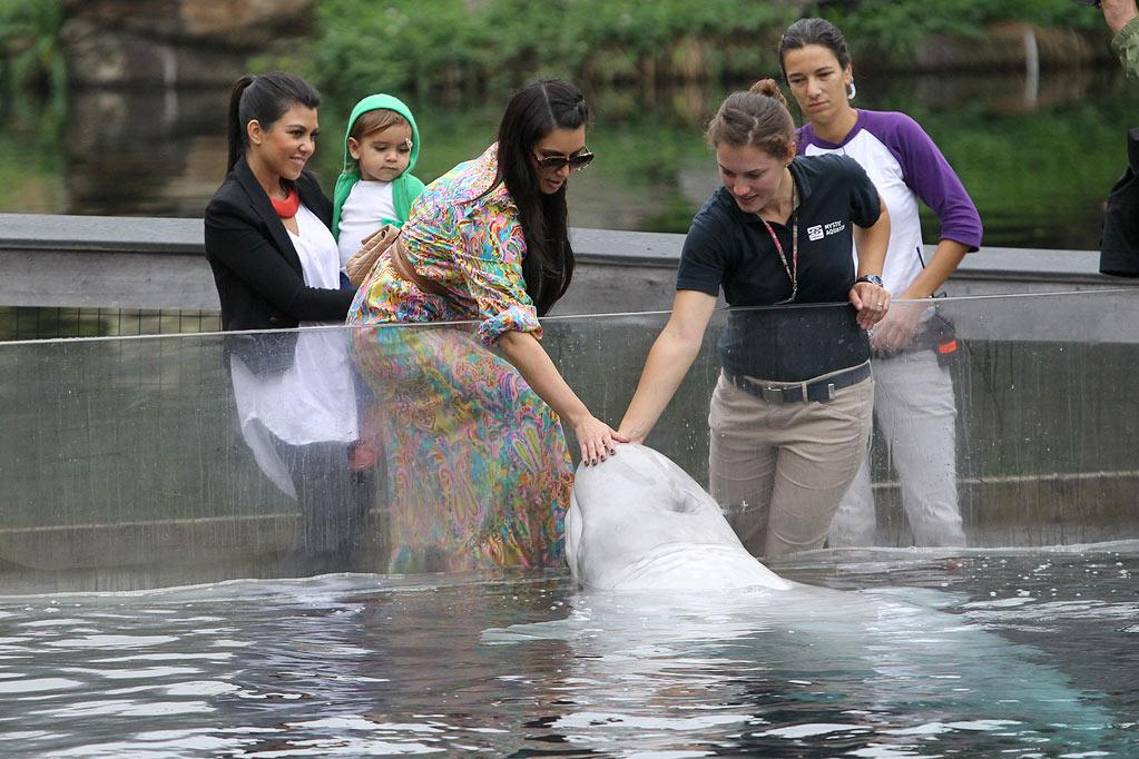 """On Thursday, Kourtney and Kim Kardashian took Kourtney's son, Mason Dash Disick, who turns 2 in December, to the aquarium in Mystic, Connecticut. The trio saw sharks and seals, and Kim even got to pet Rocky, the park's beloved beluga whale. Jae Donnelly/<a href=""""http://www.infdaily.com"""" target=""""new"""">INFDaily.com</a> - September 29, 2011"""
