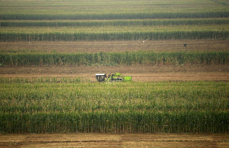 FILE PHOTO: A corn harvester and a farmer reap corn at a farm in Gaocheng