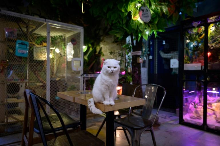 The owner of the Raccoon Cafe Table A in Seoul says people have avoided the business after hearing the coronavirus was first contracted from a wild animal (AFP Photo/Ed JONES)