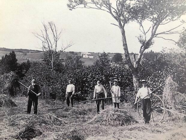 Three generations of the Breen family — John D. Breen, Wilson (Wilt) Breen, Cunningham Breen, Lawrence McCarthy and Mortimer (Mort) Breen — pictured haying on the island circa 1910 in a photo by H.W.H. Swann.